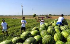 Quando i giovani ritornano all'agricoltura