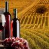 I numeri del vino e le esportazioni