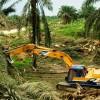 Centomila firme contro l'olio di palma negli alimenti