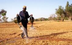 Fao: l'agricoltura può spezzare catene di disperazione