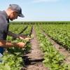 Pratiche sleali nella filiera agricola: in arrivo la direttiva Ue
