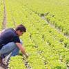Agricoltura: cosa cambia nella Legge di bilancio 2019