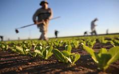Ecco le novità per l'agricoltura dalla legge di bilancio