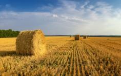 Inps, contributi per i braccianti agricoli: le aliquote per il 2021