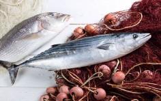 Ittico: la pescheria virtuale per gli acquisti sicuri