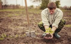 Lavoro agricolo: rilevazione delle retribuzioni medie provinciali al 30 ottobre 2018