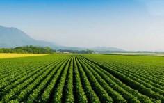 Imu terreni agricoli 2019: le istruzioni per l'esenzione al calcolo