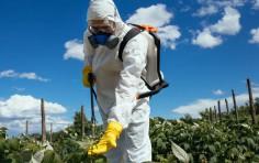 Efsa, 98,6% alimenti non ha residui pesticidi oltre limiti
