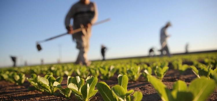 Trascinamento giornate agricoltura: denuncia entro il 25 febbraio